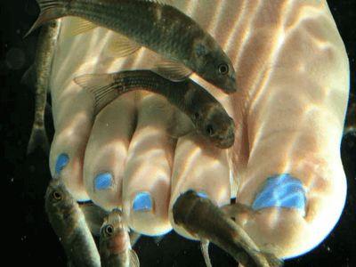 Педикюр з рибками: призначення і протипоказання